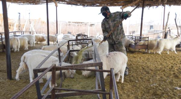 敦煌市转渠口镇乐民生态畜牧业农民专业合作社助农增收