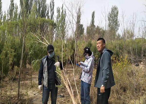 敦煌市林业技术推广中心积极开展林木种苗质量检查工作