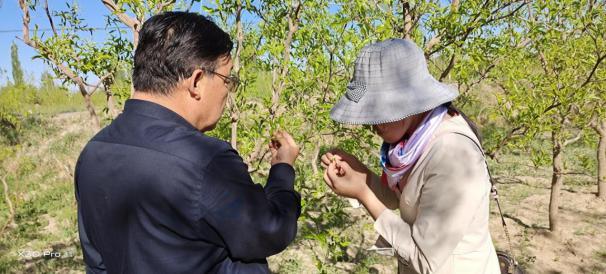 强化病虫监测预警,切实服务林农生产