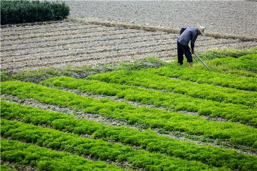 农村耕地可以抵押贷款吗?可以转让使用权吗?